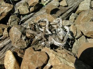 ...kostra užovky obojkovej ( Natrix natrix ) na koľajniciach v Drégelypalánku...