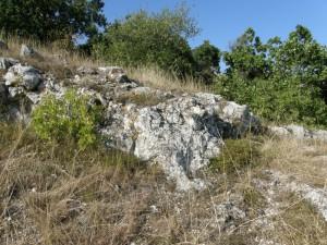 ...detail podložia pod hradom Csővár, i tu pravdepodobné, žije krátkonožka...