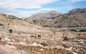 Pláň po prvom skalnom hrebeni od mora, kde sa voľne pásli štyri kone. V jednej priehlbni chránenom pred vetrom som videl jašterice Podarcis melisellensis fiuma.
