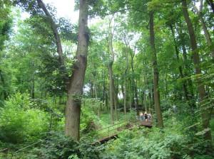 Les a schody k výhliadke Vysokyi zamok nad Lvovom.