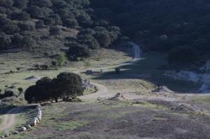 Na fotke vľavo je jazierko, vpravo studňa, v ktorom žili iba larvy Pleurodeles waltl.