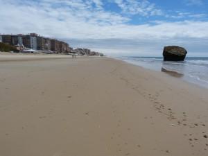 Medzi balvanmi pod hotelmi, smerom k pláži, žili jašterice Podarcis sp. ( carbonelli ?). Kameň vpravo v mori je symbolom mesta Torre de la Higuera