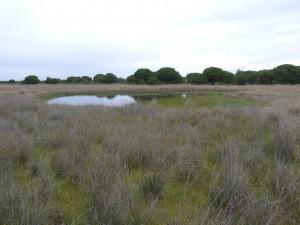 V parku i napriek predošlému suchu zostali veľké jazerá.
