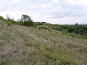 Opustené vinohrady v Dolinke.