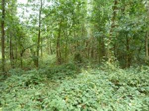 Naproti je vlhkomilnejšia divoká vegetácia.