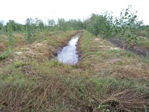 """Alebo táto vegetácia pre """"ekologickú"""" likvidáciu odpadu z konzervárne? Lokalita - Hont"""