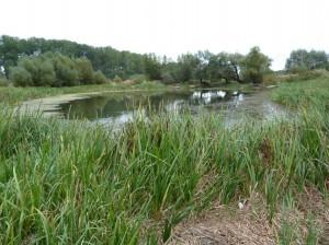 Jazierko, ktoré údajne vzniklo po bombardovaní mostu v 2. svetovej vojne. Lovili v ňom bolene.
