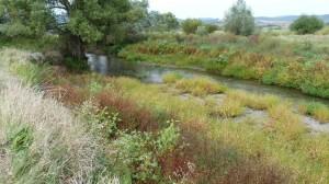I takto málo vody môže zostať v nížinnej rieke, keď inžiniery projektujú na objednávku za penize. Že by  nevedeli o týchto následkoch?