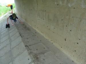 Chrobáky pod mostom.