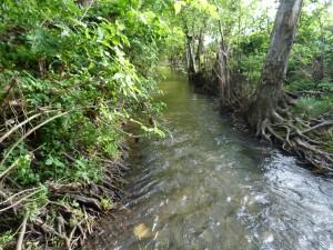 Potok Olvár nezvykle plný vody.