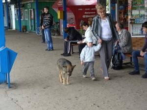 Voľne žijúci psy sú vo všetkých mestách Ukrajiny.