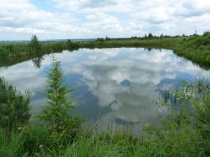 Súkromné jazero v Uriži, ryby som v ňom videl iba malé, na brehu som našiel malú vretenicu severnú ( Vipera berus ), 3.6.2014.