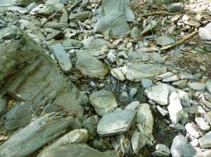 Ten istý potok o 2,5 km vyššie. I v takýchto zbytkoch vody sme hľadali niečo živého, 02.06.2015, 09:06 hod.