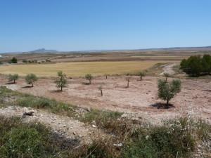 Príroda 10 km za Montealegre del Cassme, 03.06.2015, 12:22 hod.