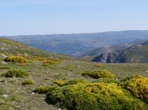Krajina nad parkoviskom, tu ešte jašterice Iberolacerta cyreni nežili, Sierra de Gredos, 06.06.2015, 09:44 hod.
