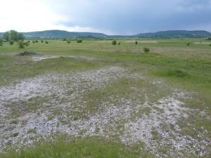 Pastviny severne dediny Kővágóörs. V okolí žili jašterice zelené ( L.viridis ).