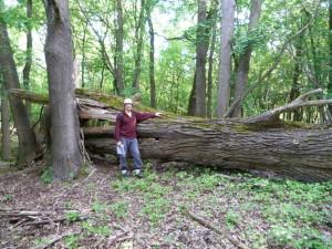 Časť lesa u Mesztegnyő je ponechaná svojmu osudu, 09.05.2016.