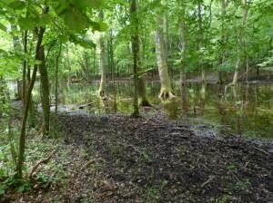 Močiar v lese na juh od rybníka Dávodi.