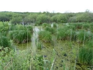 Okrajová časť jazera Baláta-tó.