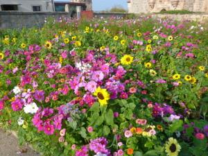 Kvetinová záhrada na dvore hradu.
