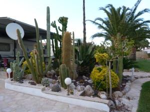 Kaktusová záhrada na okraji mesta Peniscola.