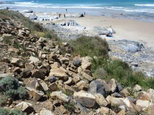 Pláž 2,5 km južne prístavu Sines. Tu som medzi kameňmi zahliadol jednu neurčenu jaštericu, viac krát sa neukázala.