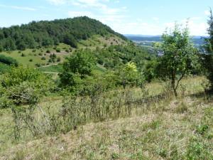 Hirschauer Berg - rezervácia, bohatá lokalita jašteríc zelených ( Lacerta bilineata ).