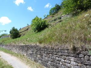 Hirschauer Berg - rezervácia, detail spodnej časti svahu.