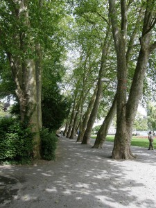 Park pri jazere Vierwaldstätter. Osvetlenie je pripevnené na stromoch.