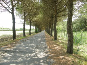 Stromoradie na ulici Via Pirano