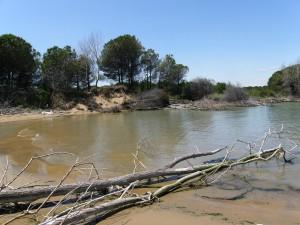 Nánosy dreva v ústí rieky Tagliamento.