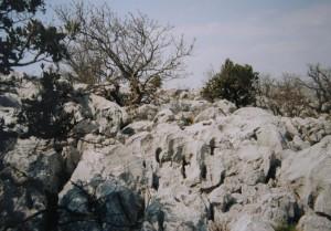 ...terén na vrchole vápencového kopca, Trsteno...
