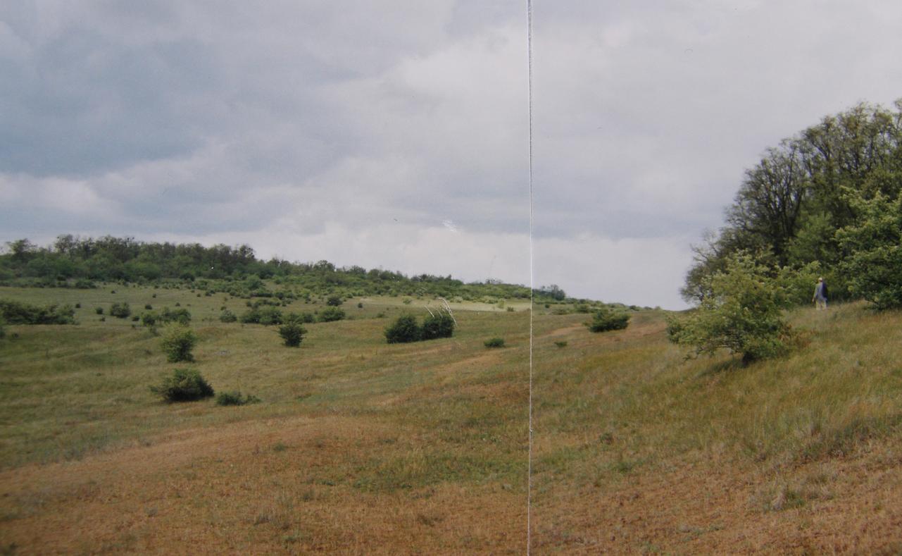"""Prírodná rezervácia  """"Poniklecová lúčka"""" na západ od Kráľovského Chlmca."""