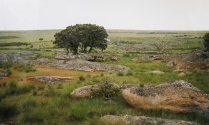 ...vlhké pastviny s obrovskými kameňmi na povrchu a korkovými dubmi. Severné španielsko-portugalské pohraničie..