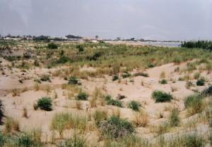 ..pláže u Ampolly. Miesto výskytu Acanthodactylus erytrurus.