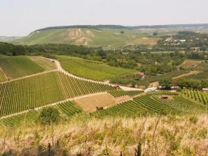 Ďalšie vinice na sever od Weinsberg-u.