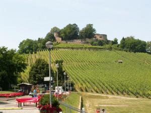 Vinná réva na kopci Weinsberg. Pod hradom na parkovisku sa chystala nejaká slávnosť. Pripravovali pódium a stoly. Foto 03.07.2010