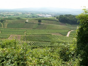 Pohľad na juh z kopca Limberg 272 m.n.m.