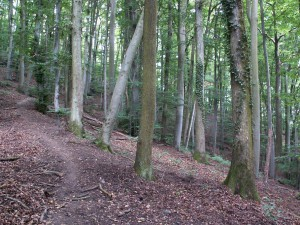 Bukový les na vrchole Limbergu. Foto 04.07.2010