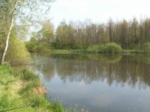Halápi halastó ( Halápský rybník v lese ).