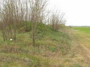 Piesková duna medzi poliami slúži čato ako smetisko, ale je často bohatá na jašterice zelené ( Lacerta viridis ).
