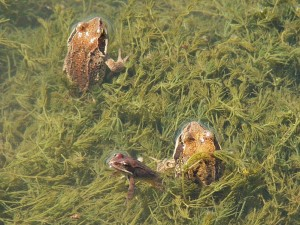 ...a takto sa schovávajú v hustej tráve....