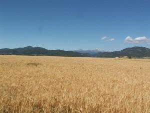Rozlúčka so zasneženými Pyrenejami ( Pic du Midi ) cez dozrievajúce obilie, to sú kontrasty Španielska....
