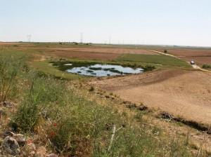 Jazierko plná žiab pod ruinou.